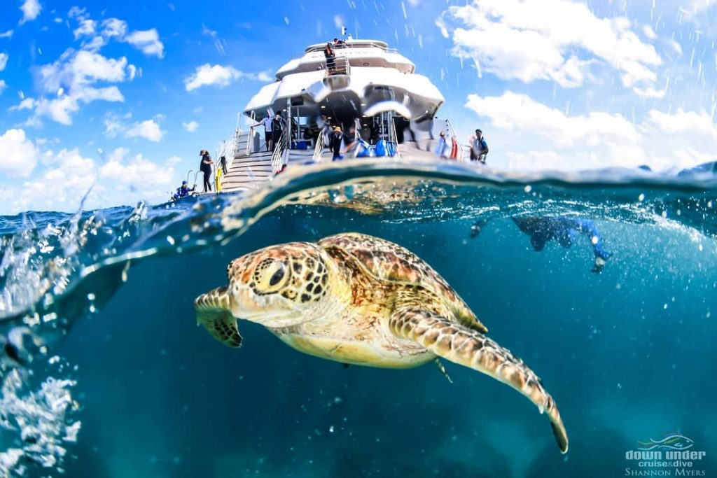 Downunder cruise and dive